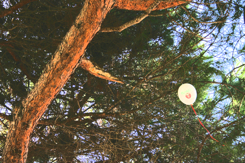 Balloon-in-tree